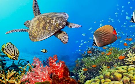 930x431_great_barrier_reef